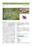 画像16: 新臨床家のためのホメオパシー マテリアメディカ 上下巻セット (16)